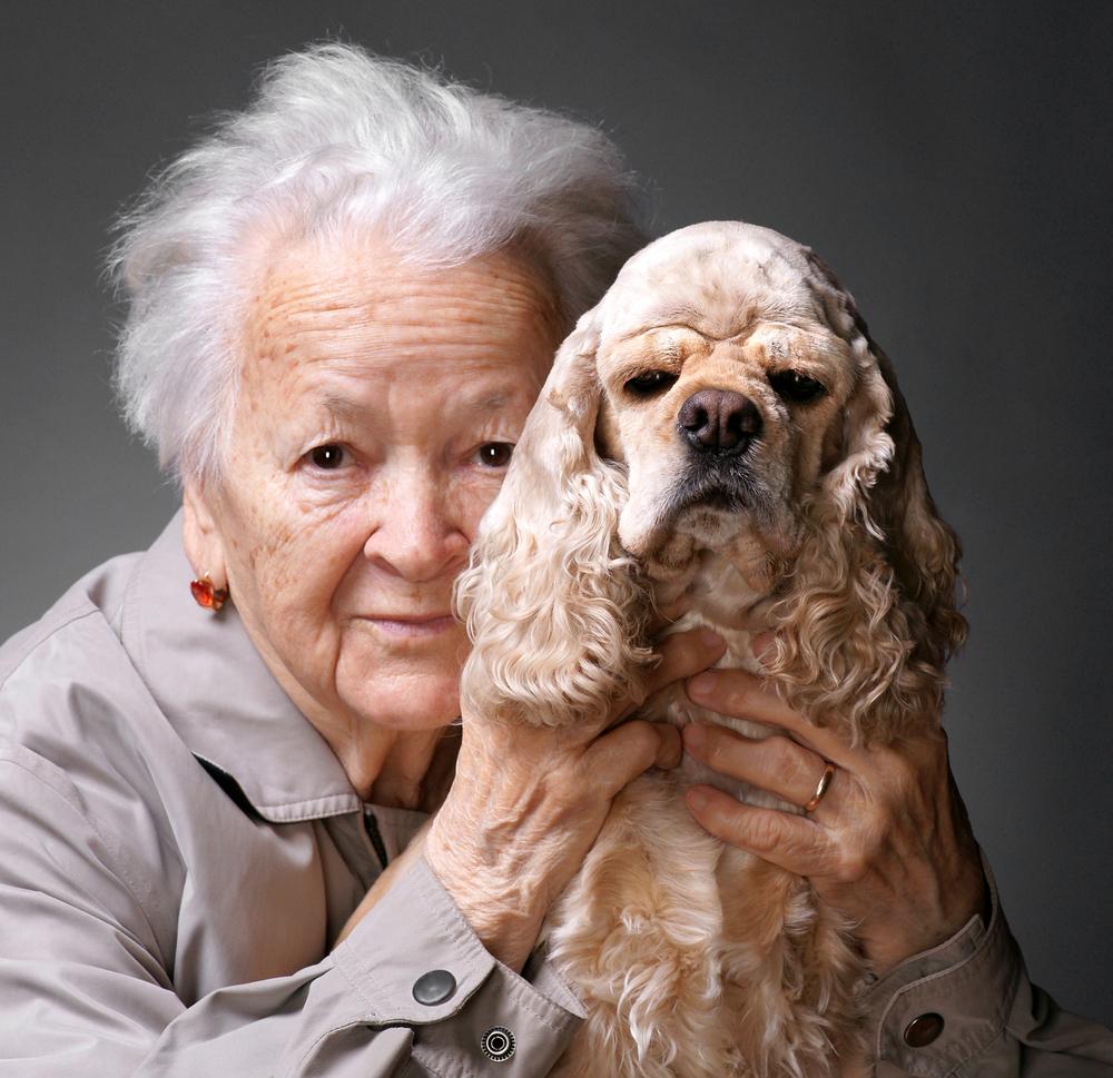 犬の高齢化