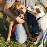 愛犬にもしものトラブルが起こった時、どうしたらいい?日本の法的解釈について