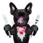 なぜワンコはうんちを食べてしまうの??食糞の原因と、止めさせる対策についてお話します!