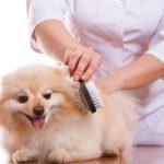 愛犬のフケはシャンプーで改善できるのか?かさぶたのようなフケはどうしたらいい?