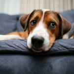何も食べてないのに、愛犬が口をくちゃくちゃしている?!一体なぜ?