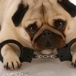 犬に関する裁判事例をご紹介!【トラブル・苦情・事故など】