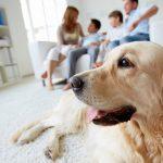 集合住宅で飼うのにぴったりな犬種、おすすめランキング!