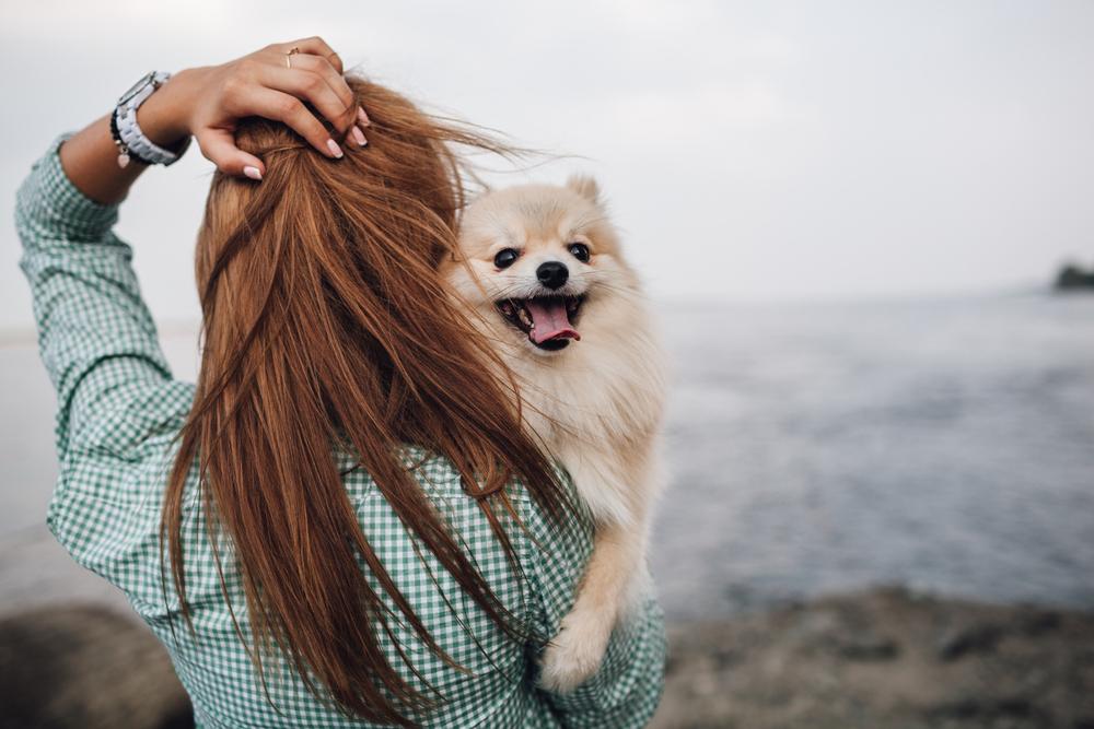 有名人・芸能人の愛犬家をご紹介