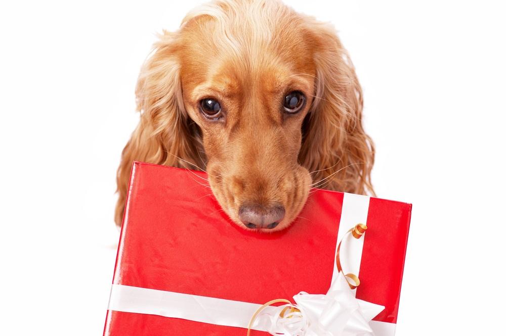 愛犬家がもらって喜ぶプレゼント