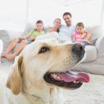 【愛犬家住宅】愛犬との暮らしを全面サポート!近年需要が伸びてきた愛犬家住宅のお話