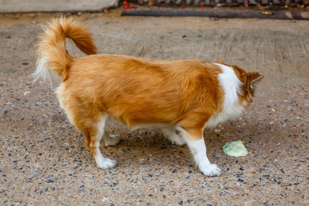 犬の吐く症状