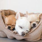 おしゃれでかわいい犬用ベッドをご紹介♪低コストで簡単なベッド手作り方法も