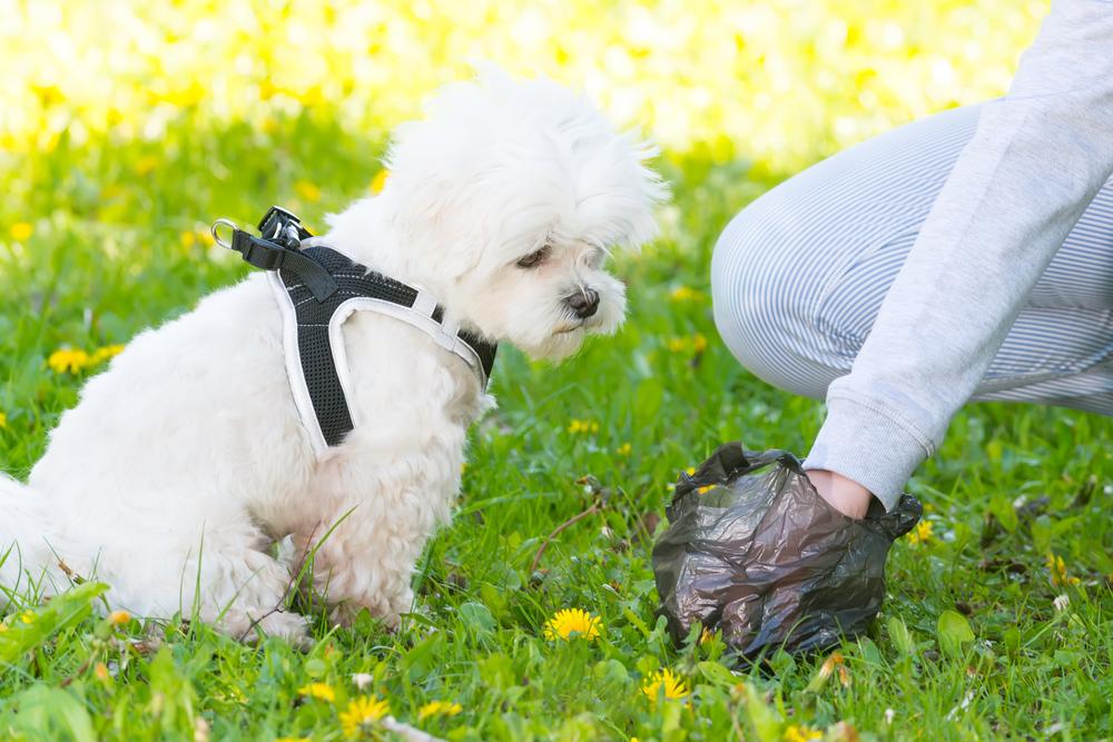 犬の血便の原因