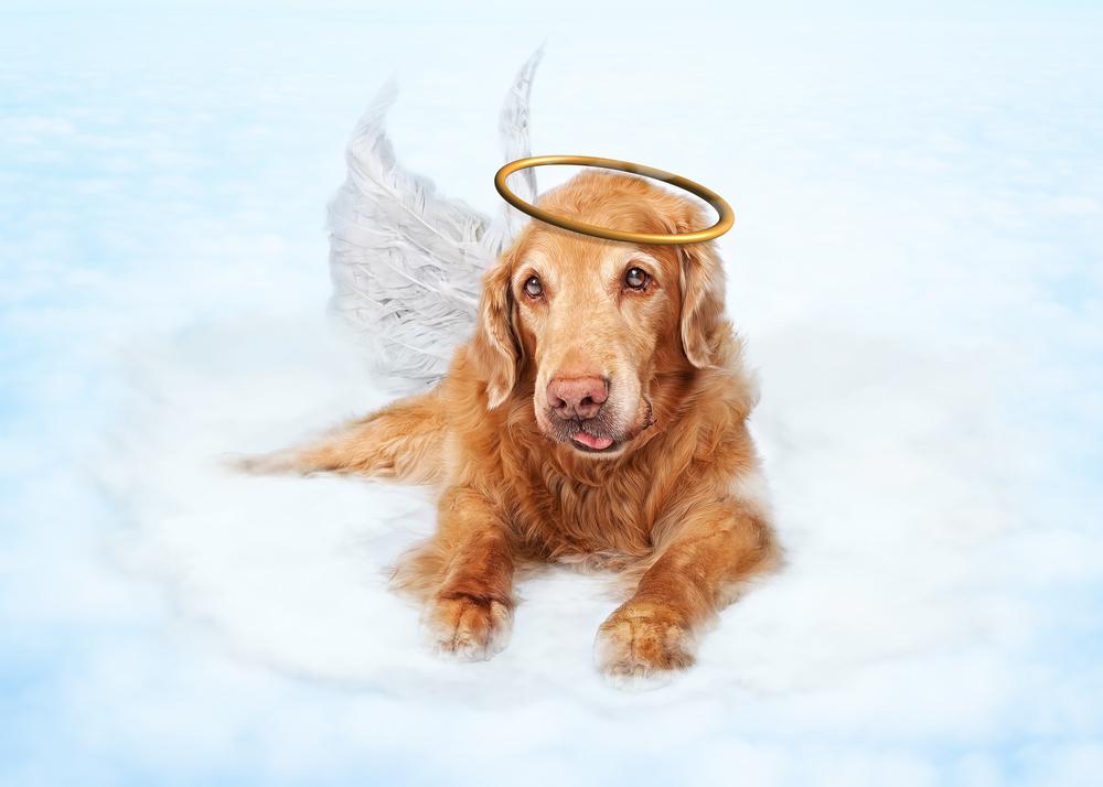 愛犬の死で自分を責め続けていませんか