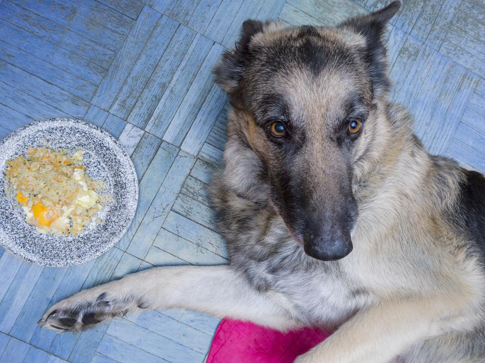 愛犬がドッグフードを食べない原因