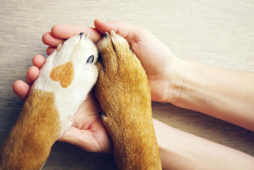 愛犬癌発病
