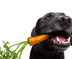 健康にいい野菜