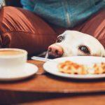犬カフェの魅力、楽しみ方!全国でおすすめの犬カフェもご紹介
