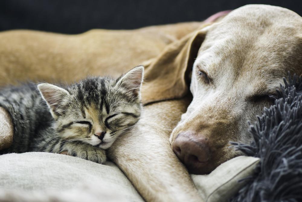 犬と猫は仲良し
