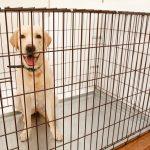 犬用サークルは必要?選び方のコツや使用上の注意点などご紹介