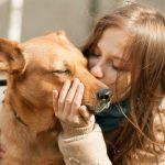 【犬の里親になりたい】里親掲示板や引き取り条件など、お役立ち情報