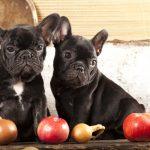 犬に玉ねぎは危険です!症状や致死量、誤飲した時の対処法について
