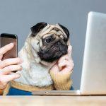 読んで楽しいおすすめ犬ブログ!書くことで稼ぎにもなるってホント?