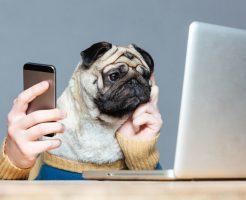 読んで楽しいおすすめ犬ブログ