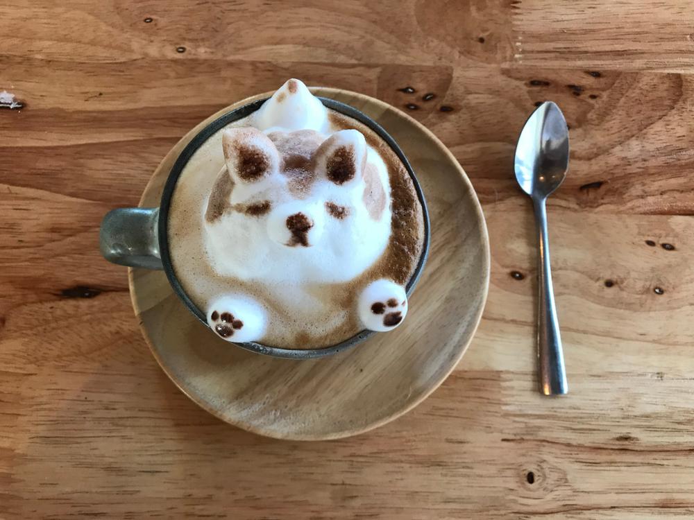 全国でおすすめの犬カフェ