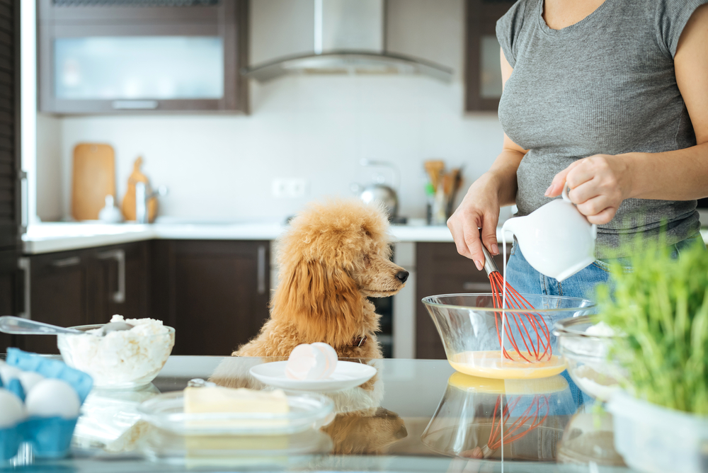 犬に牛乳はダメ