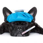 犬風邪は人にうつる?熱は?犬風邪の原因と症状、治療法について