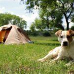 愛犬とキャンプは最高に楽しい♪必要アイテムや注意点などもご紹介