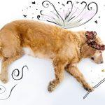 【愛犬生まれ変わり】犬の輪廻転生について、あなたはどこまで信じますか?