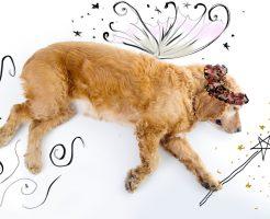 犬の輪廻転生