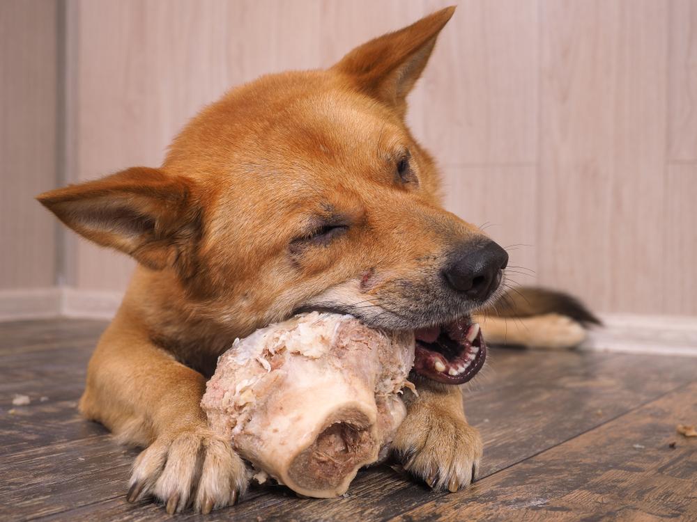 飼い犬は死んだ飼い主を食べる