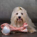 【飼い犬は死んだ飼い主を食べる】その驚きの理由とショッキングな実例をご紹介