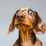 犬の突然死は心臓や脳の病気?考えられる原因や対策、愛犬突然死の体験談など