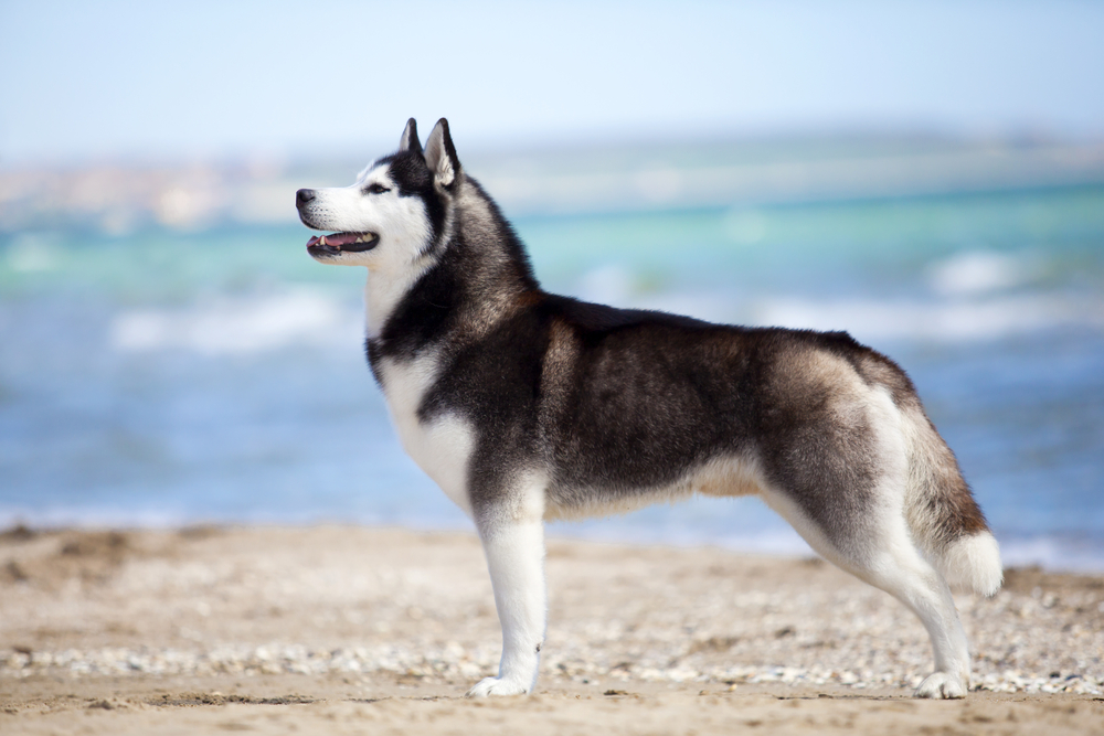 大型犬の種類や魅力