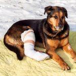 【犬の骨折】原因、症状、治療法は?愛犬を骨折から守る飼い方も解説
