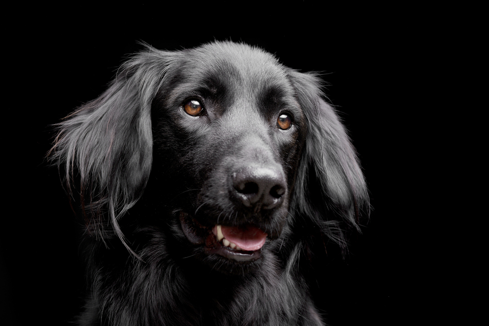 黒犬の魅力