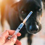 犬の混合ワクチンは打たない方がいい?危険性と不要性について暴露します!