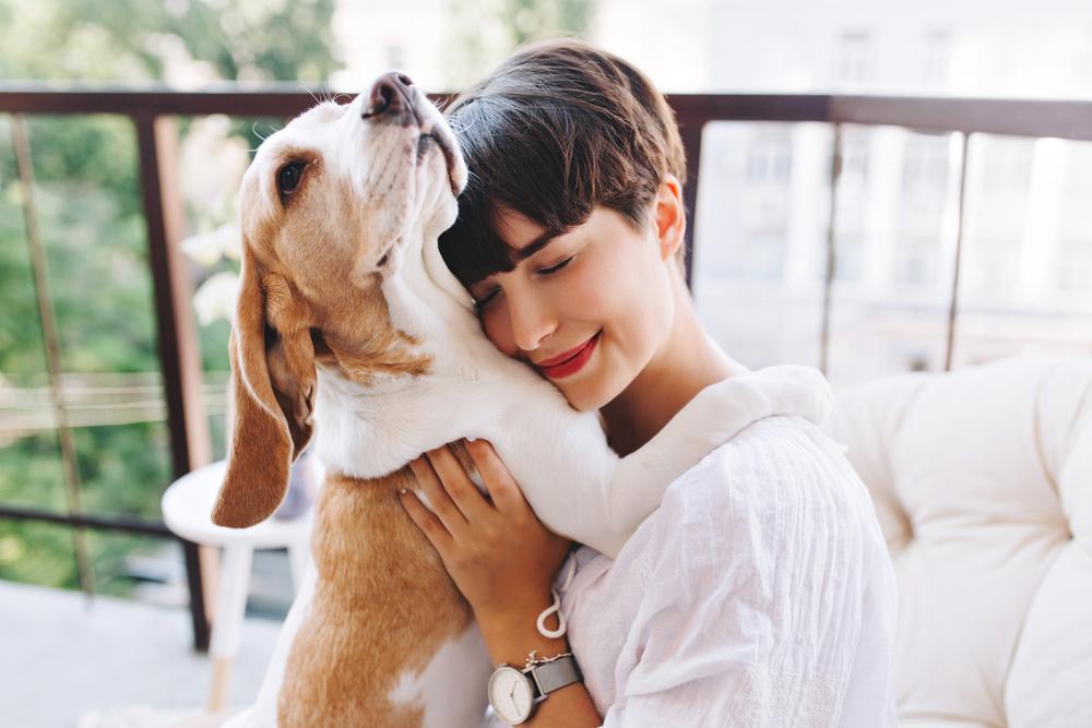 犬の抱っこ