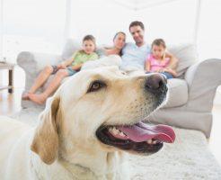 愛犬との暮らしを全面サポート