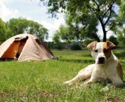 愛犬とキャンプ