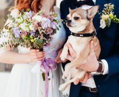 愛犬同伴の結婚式