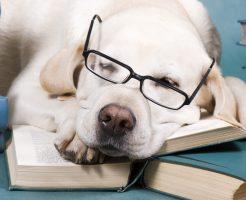 世界の天才犬ランキング